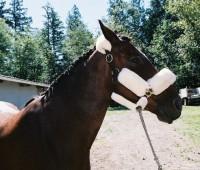 3367-horse