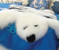 Sheepskin bear rug